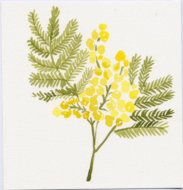 Acacia.jpg